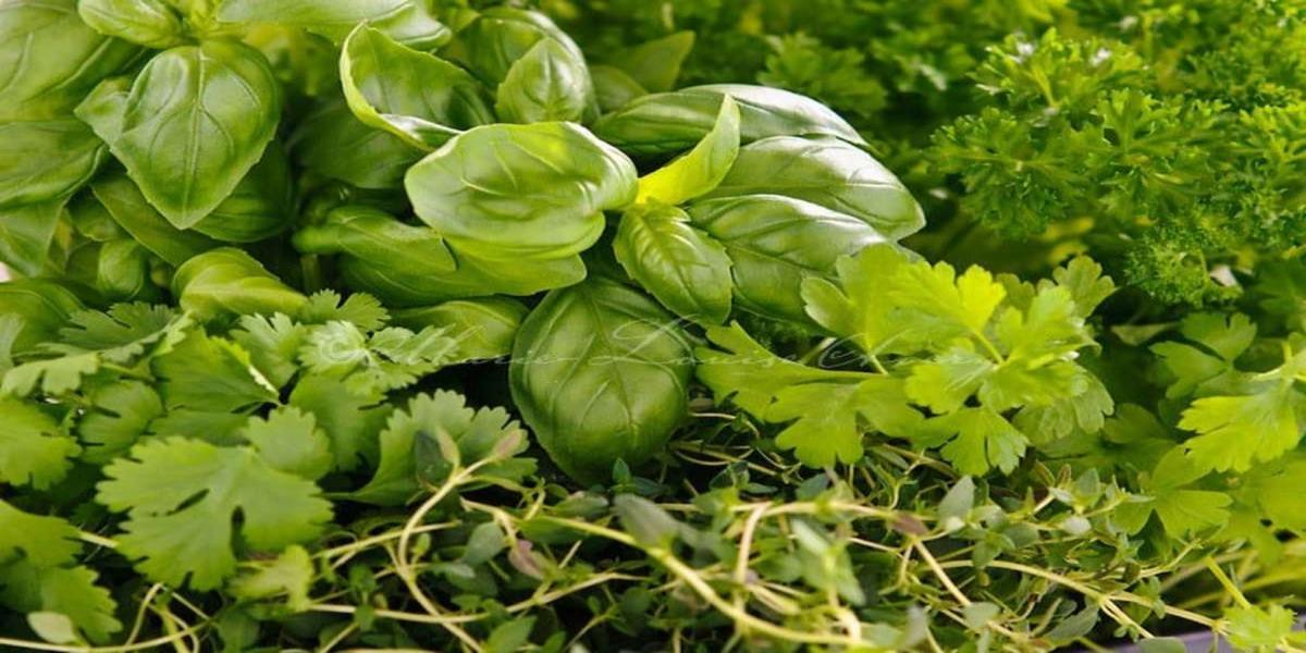 Como Usar Ervas Frescas ao Cozinhar